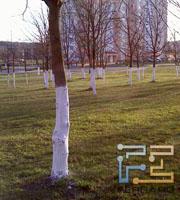 DX900-photo-03s