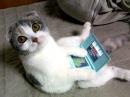 Будущие версии Nintendo DS и Sony PSP получат поддержку 3G сетей?