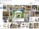 Google оптимизирует поиск фотографий