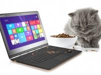 PawPad Yoga 9 — ноутбук-трансформер для котов от Lenovo