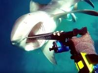 Играем на Android: Подводная охота