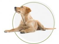 Лучшие корма для собак против аллергии в «Kormax»
