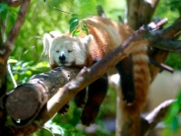 Firefox будет получать обновления по-новому