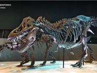 SMARTtech: 3D-технологии в музейной практике