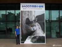 Первое фото с камеры Redmi Note 8 Pro и огромный плакат с котиком