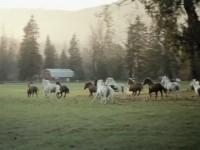Рекламный ролик BlackBerry Bold 9780