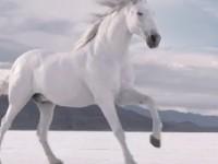 Рекламный ролик Huawei Ascend P1