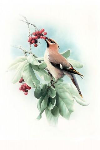 С новым годом, друзья!  Перед вами великолепные рисунки птиц.